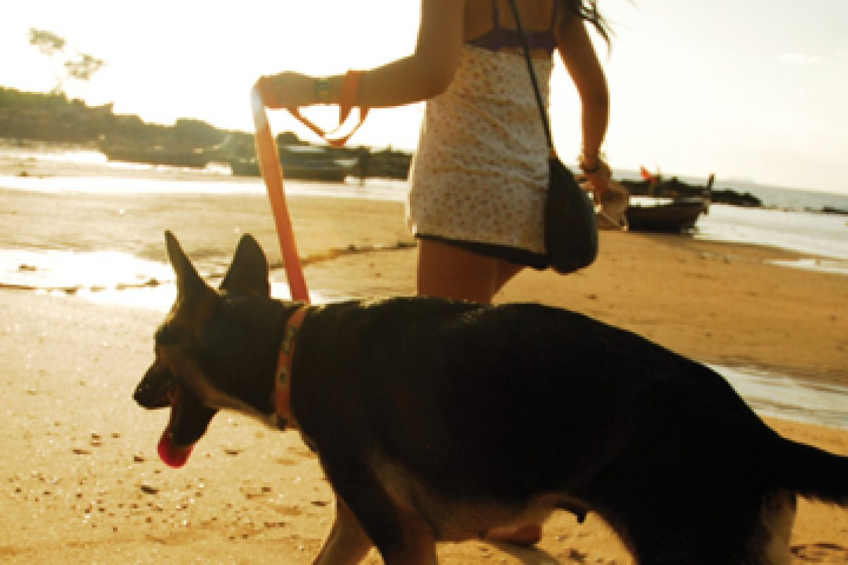 Backpacking? It's a dog's life! Volunteering with Lanta Animal Welfare in Koh Lanta, Thailand