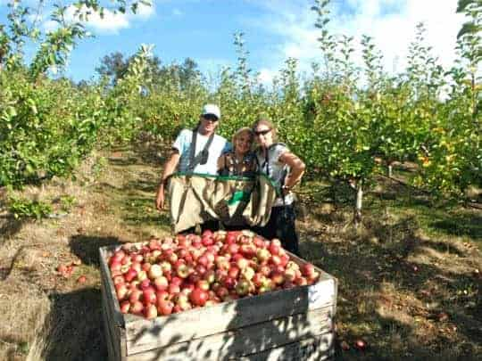 Fruit picking in Australia